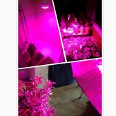E27 6W LED Plant Grow Light Hydroponic Lamp Bulb 2 Red 1 Blue Energy Saving for Indoor Flower Plants Growth Vegetable Greenhouse 85-265V